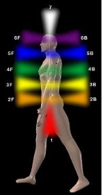 Diagram 5: Positioning of the chakras