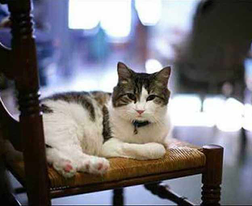 Oscar: The cat who predicts death at Rhodes Island Steere House Nursing & Rehabilitation Centre